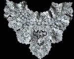 antique collar brussels and point de venise lace