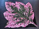 vintage designer hanky big leaf